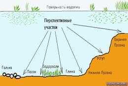 Ловля сазана: как ловить сазана на жмых, на бойлы и какие снасти для ловли сазана осенью лучше